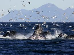 humpbacks adventure tours